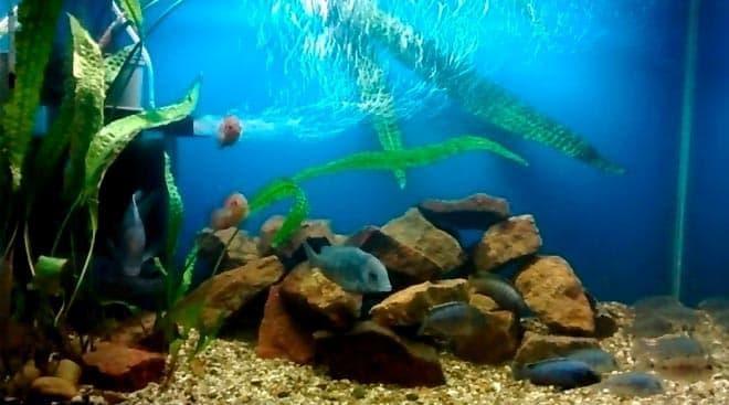 аквариум для голубого дельфина