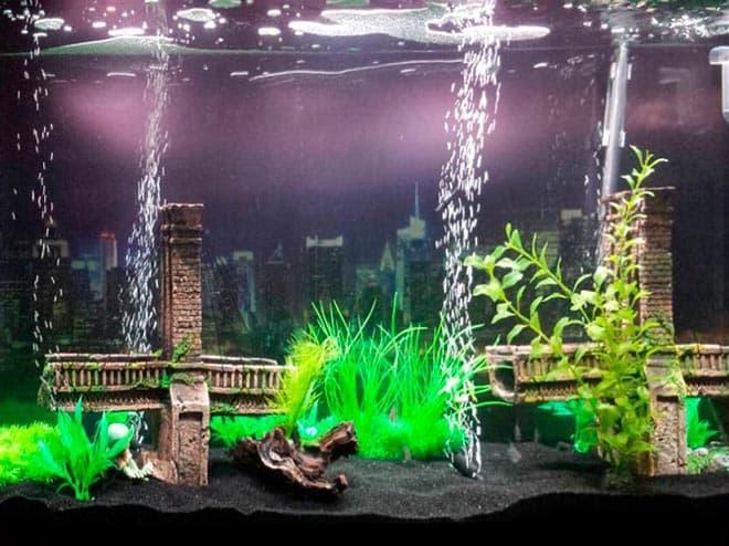 аэрация с растениями