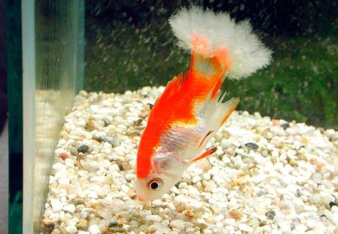 больная рыбка