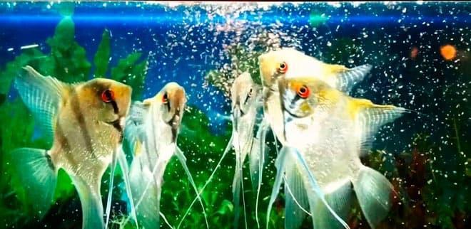 кормление рыбок