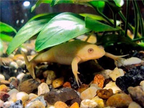 растения и лягушки