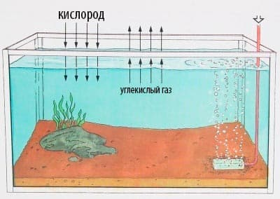 схема движения в аквариуме