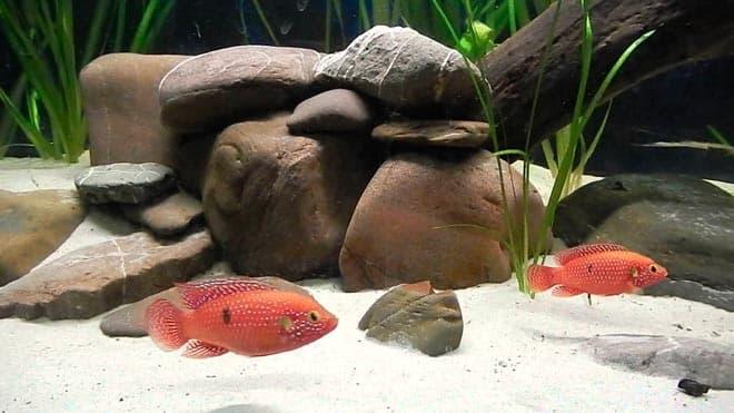 аквариум хромисов