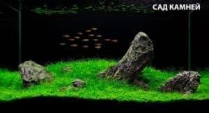 природный сад камней