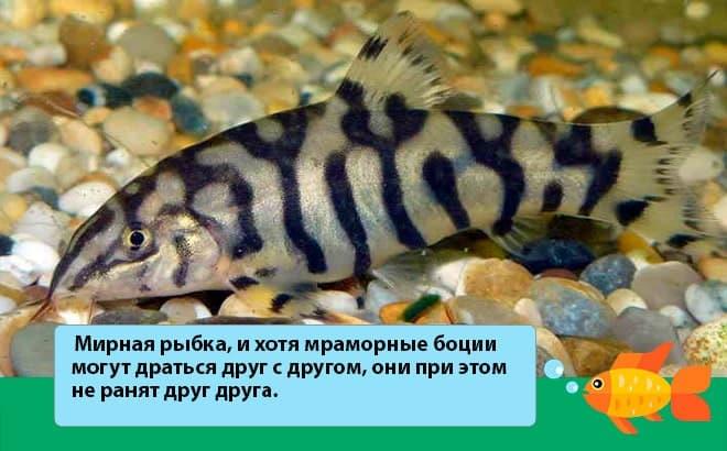 мирная рыбка