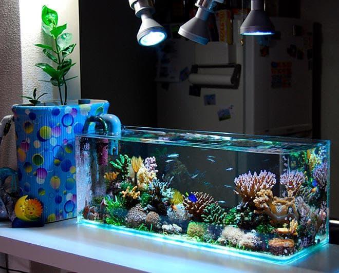 морской аквариум оформление