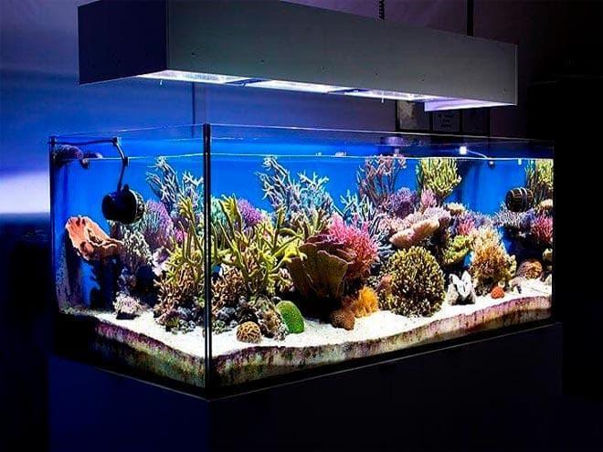 расположение насосов в морском аквариуме