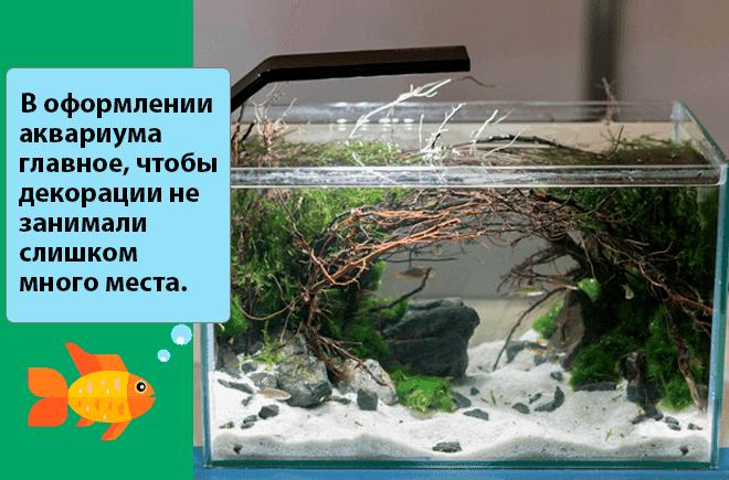 оформление микро аквариума