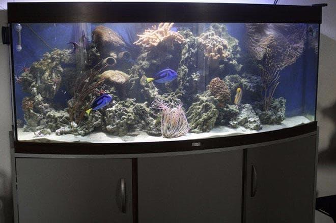 аквариум для рыбы голубой хирург
