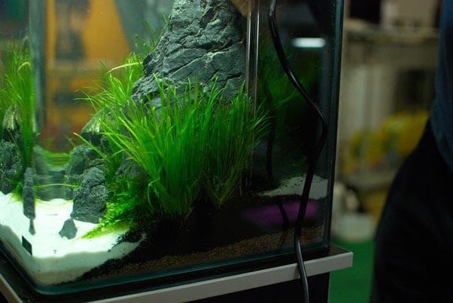 водоросли для аквариума 20 литров