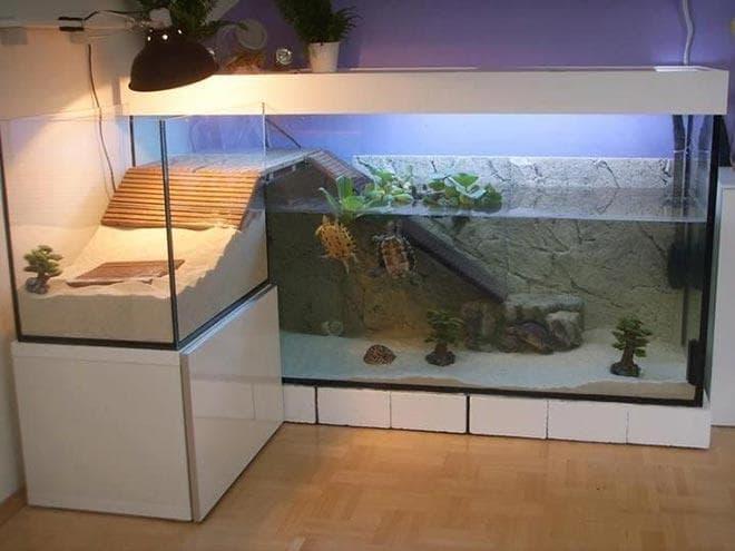 лесенка в акватеррариуме