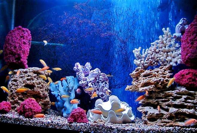 гроты в морском аквариуме