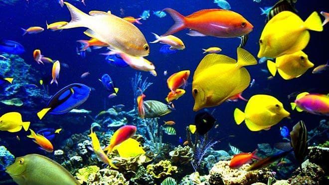 виды рыбки хирург