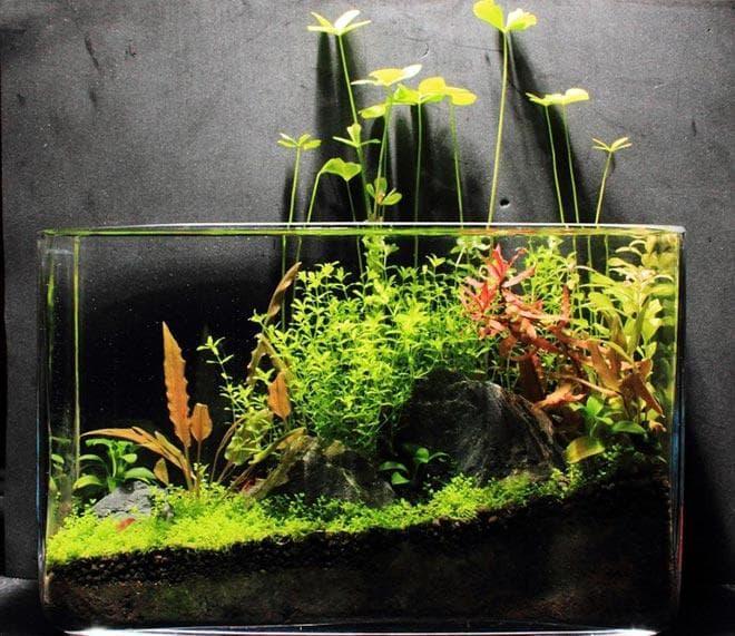 оформление нано аквариума
