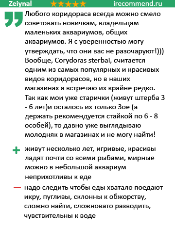 Коридорас Штерба отзывы
