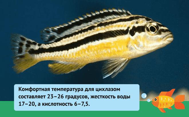 Параметры воды для рыбки