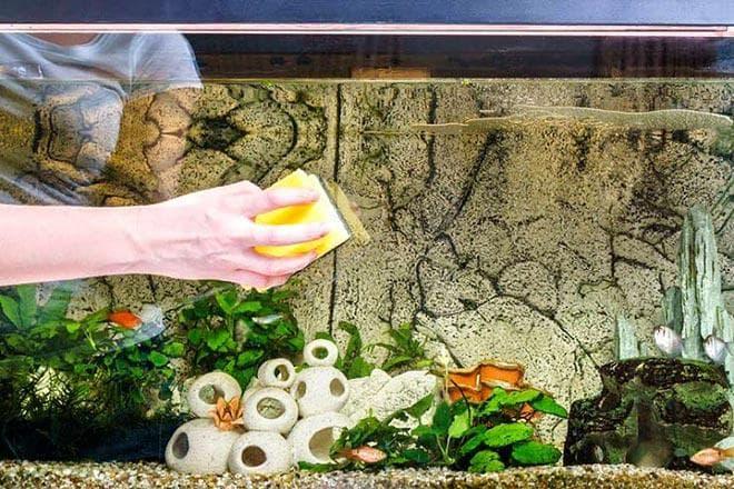 Механическое очищение от бурых водорослей