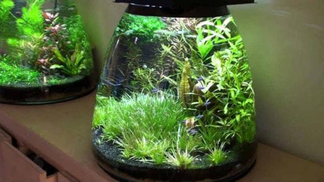 виды нано аквариумов