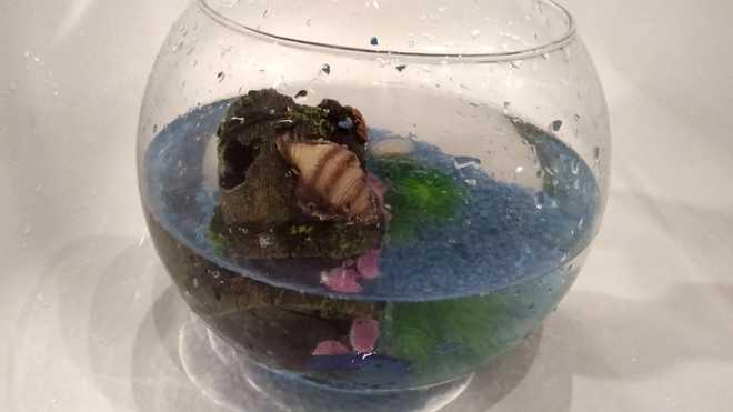 Обустройство аквариума